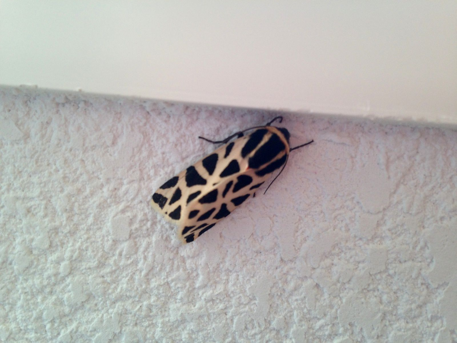 #papillon #charlotteblabla blog