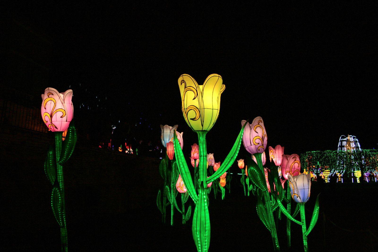 #lanterne #chinois #exposition #charlotteblabla photographie