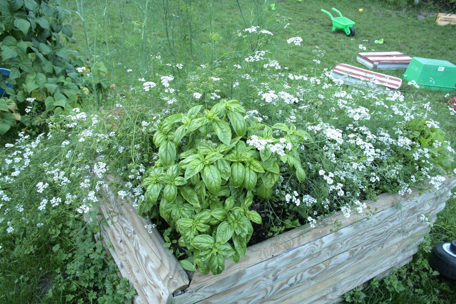 #jardin #charlotteblabla blog
