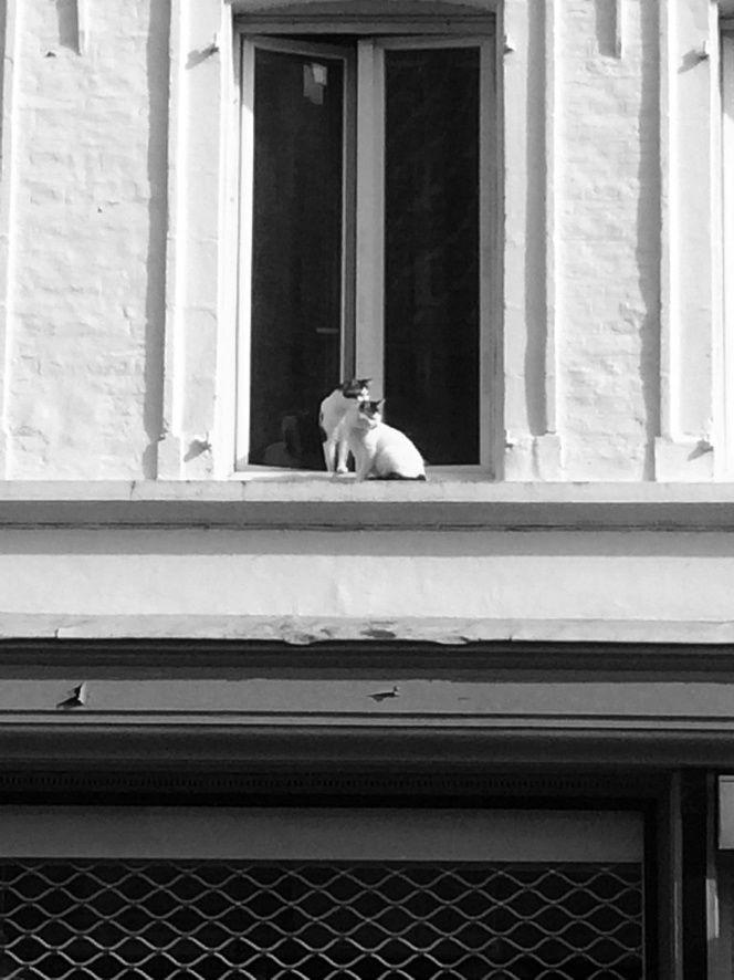 Les Chats curieux