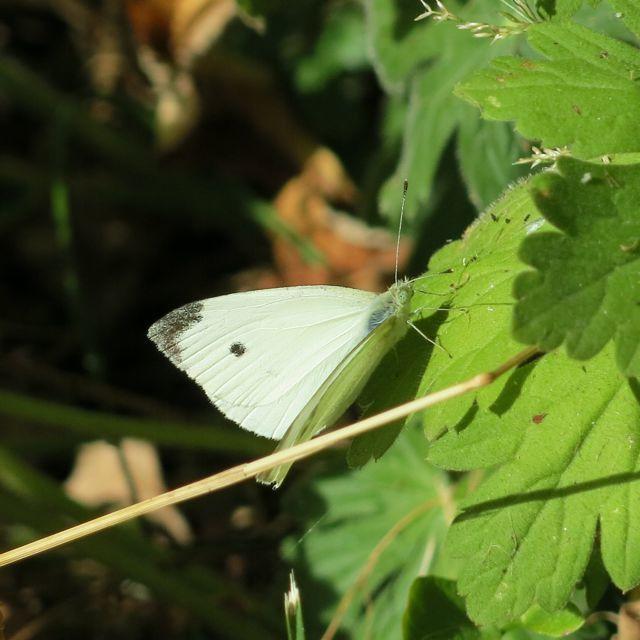 effets papillon