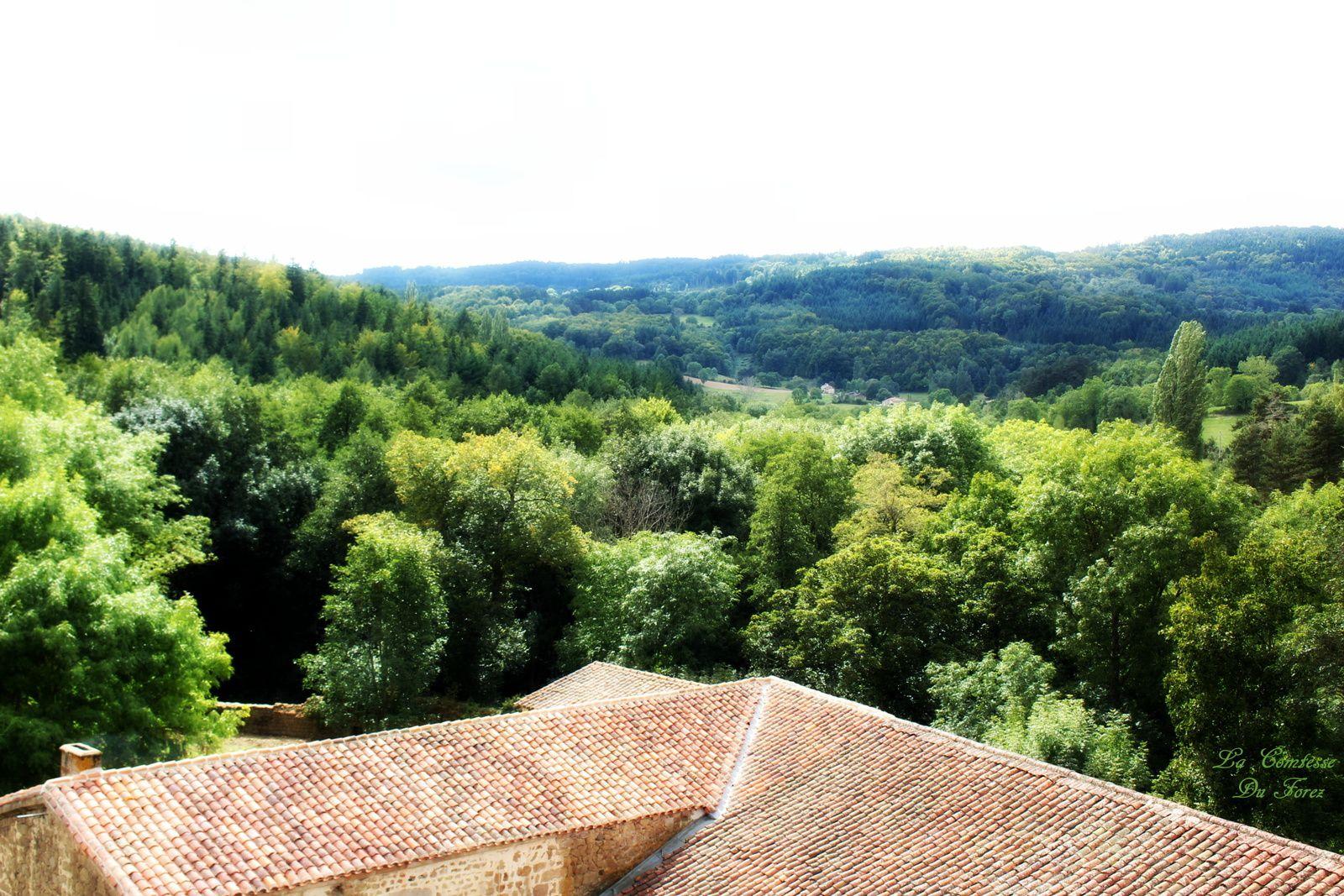 à l'air libre vue sur la forêt avoisinante