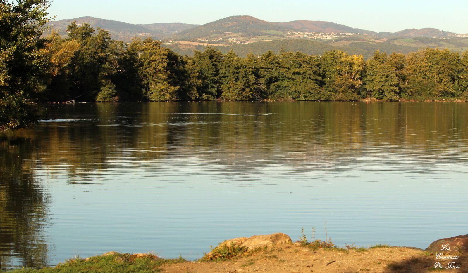 Etang de Savigneux (42600, Loire)