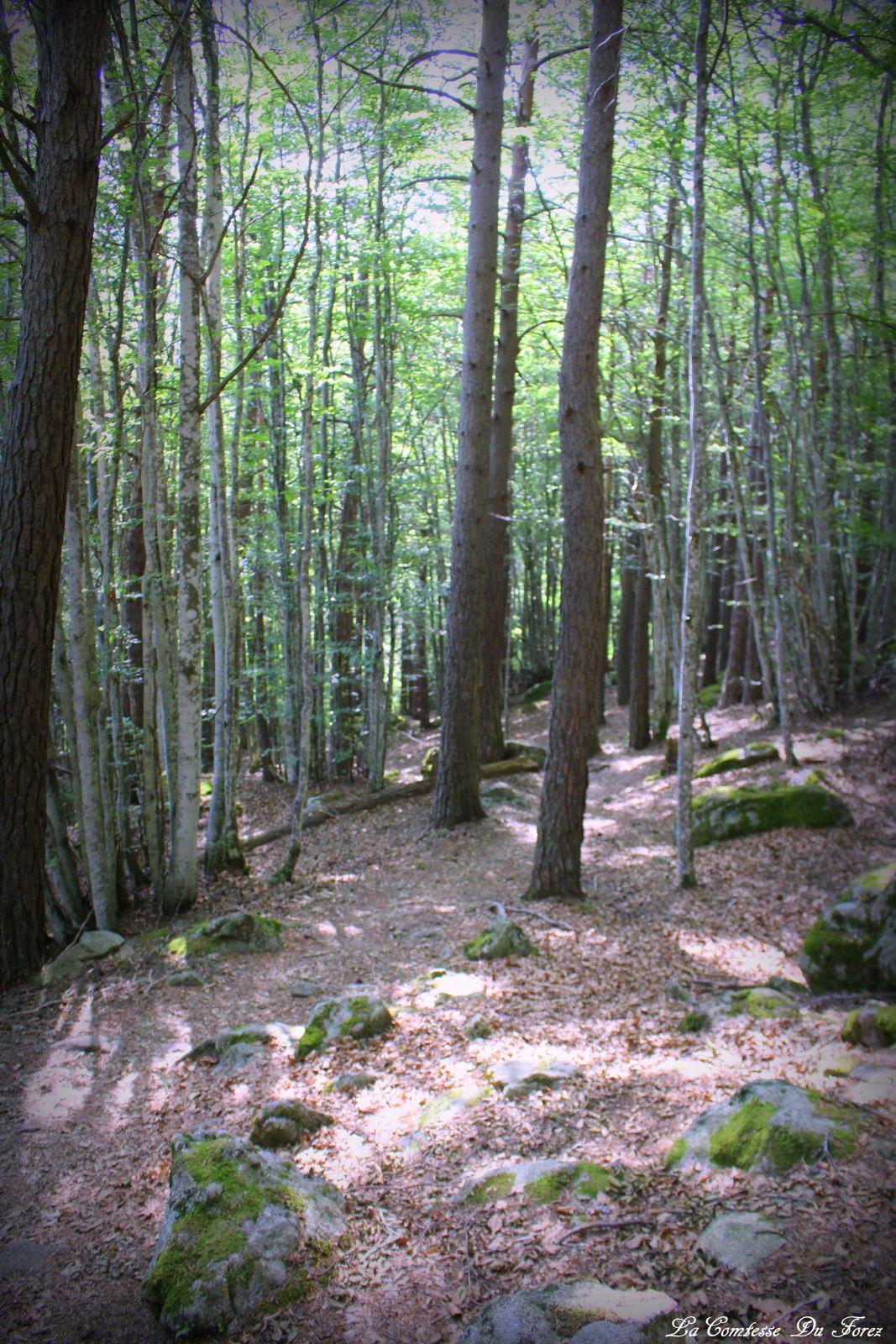 Cascade du creux de l'Oulette (63660 La Chaulme)