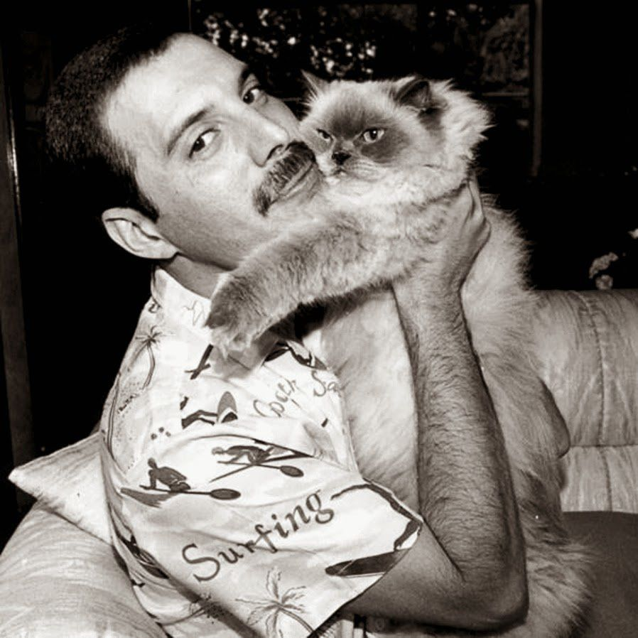F. Mercury&cat. photo ???