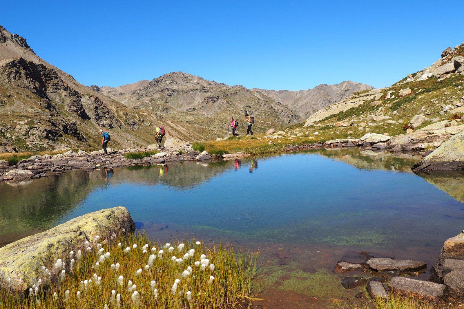 linaigrettes au bord du lac