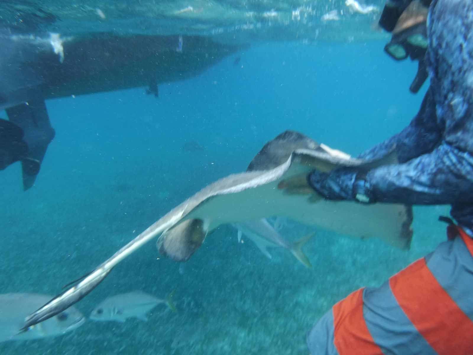 Un millième de lieue sous les mers :Hol Chan Reserve