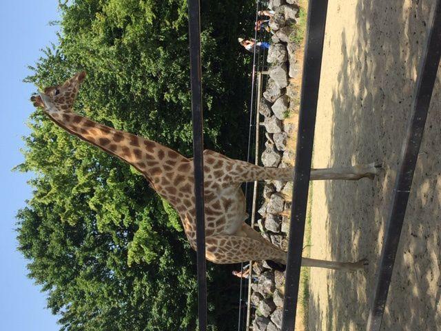 Anatole France maternelle - Zoo Maubeuge - 24/07