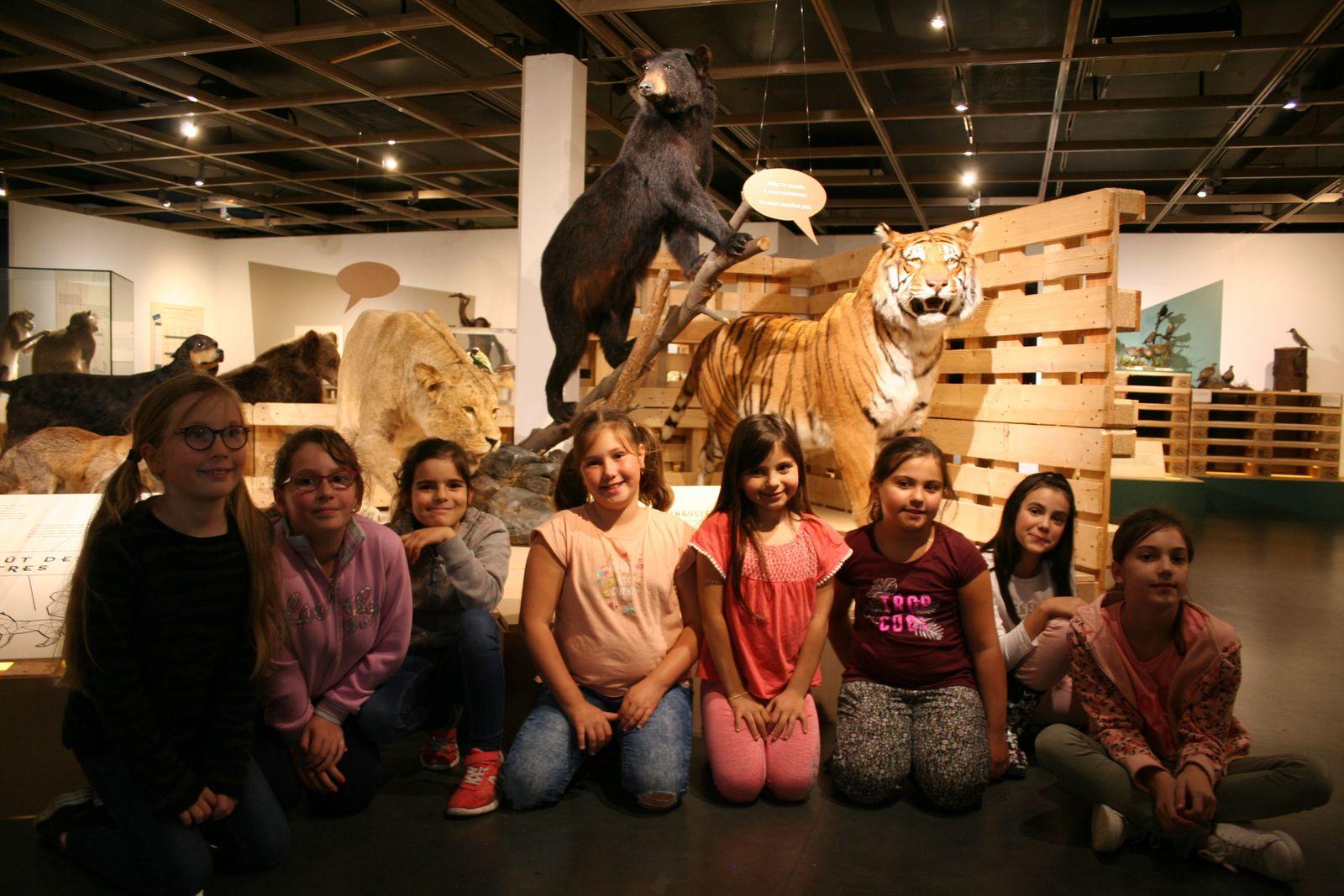 Centre Anatole France. Sortie au musée d'histoire naturelle à Lille. 8/9 ans