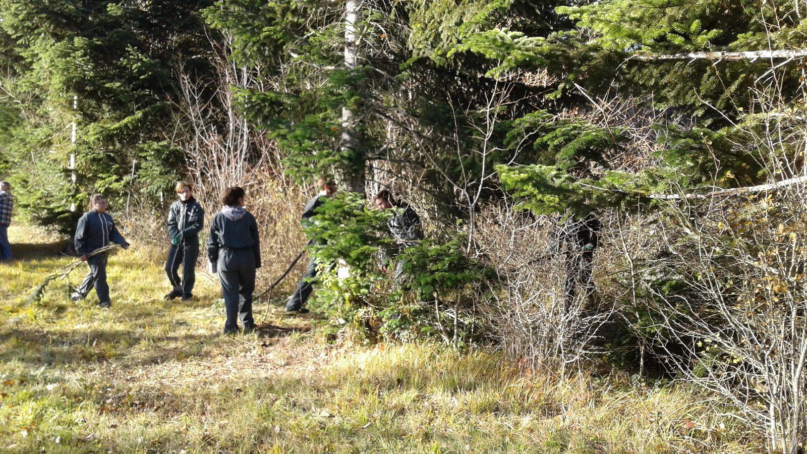 22 Novembre 2017: Première étape du projet décoration de Noel dans St Jo. Les élèves de 3ème SEGPA sont allé en forêt ( grâce à un accord avec l'ONF) pour récupérer des branches de sapin.