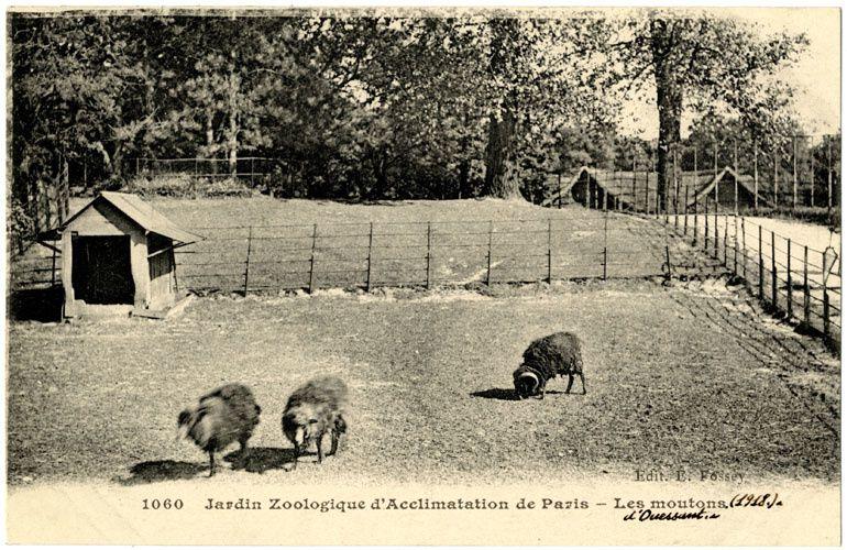 Toujours du Jardin des Plantes (2)