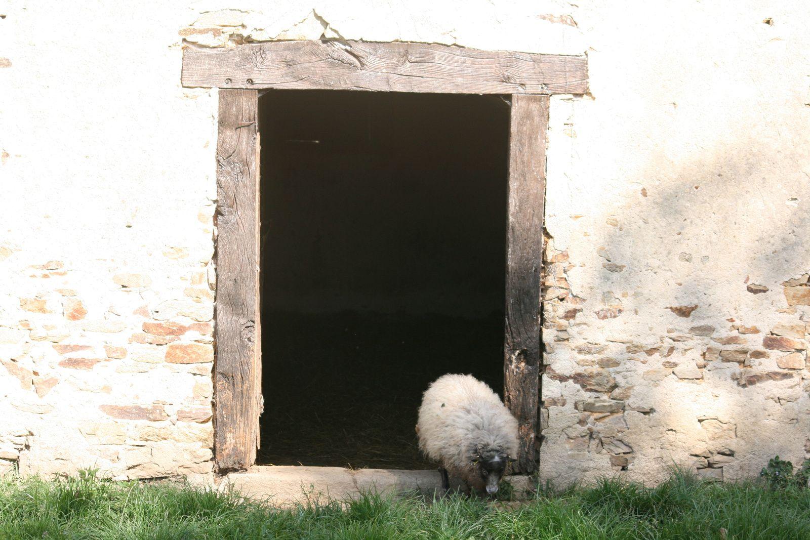 Vivre en bergerie, non merci!
