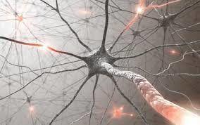 Jusqu'à quel âge produit-on des neurones ?