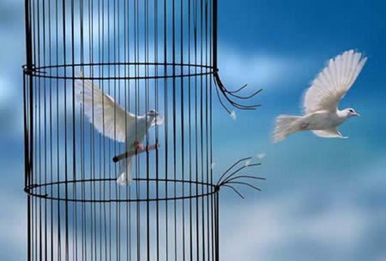 Une histoire de liberté... une façon de vivre...