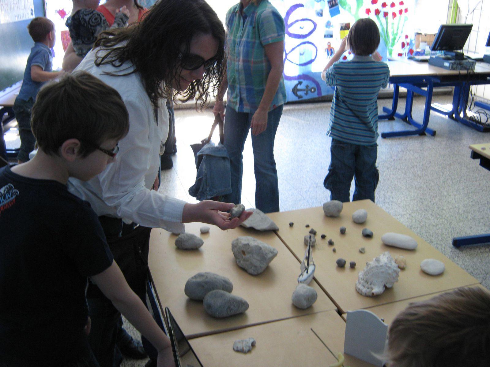 - Nos trésors : coquillages, fossiles, carapaces, algues, galets...
