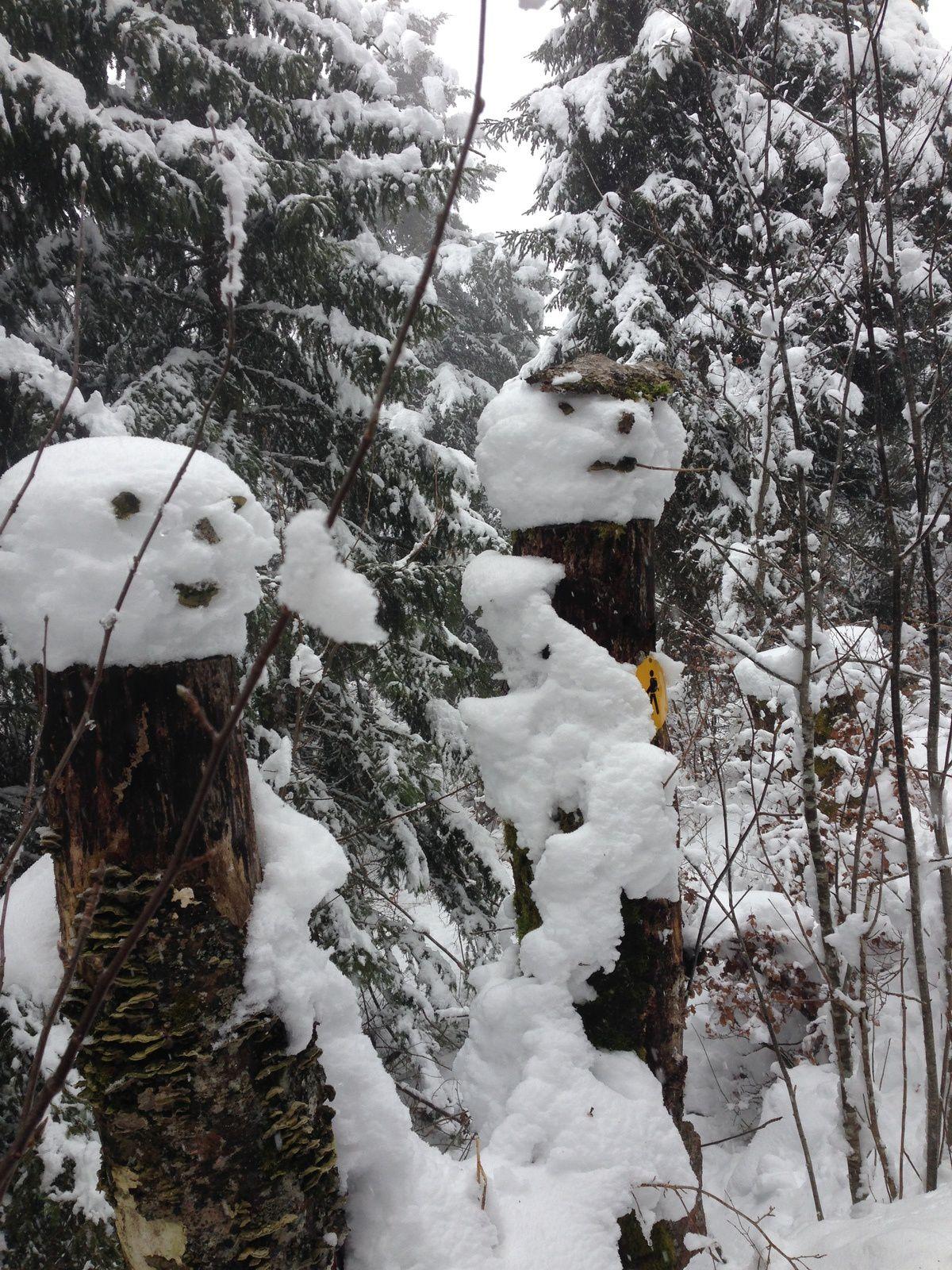 mardi 7 Février: Raquettes au col du Mollendruz