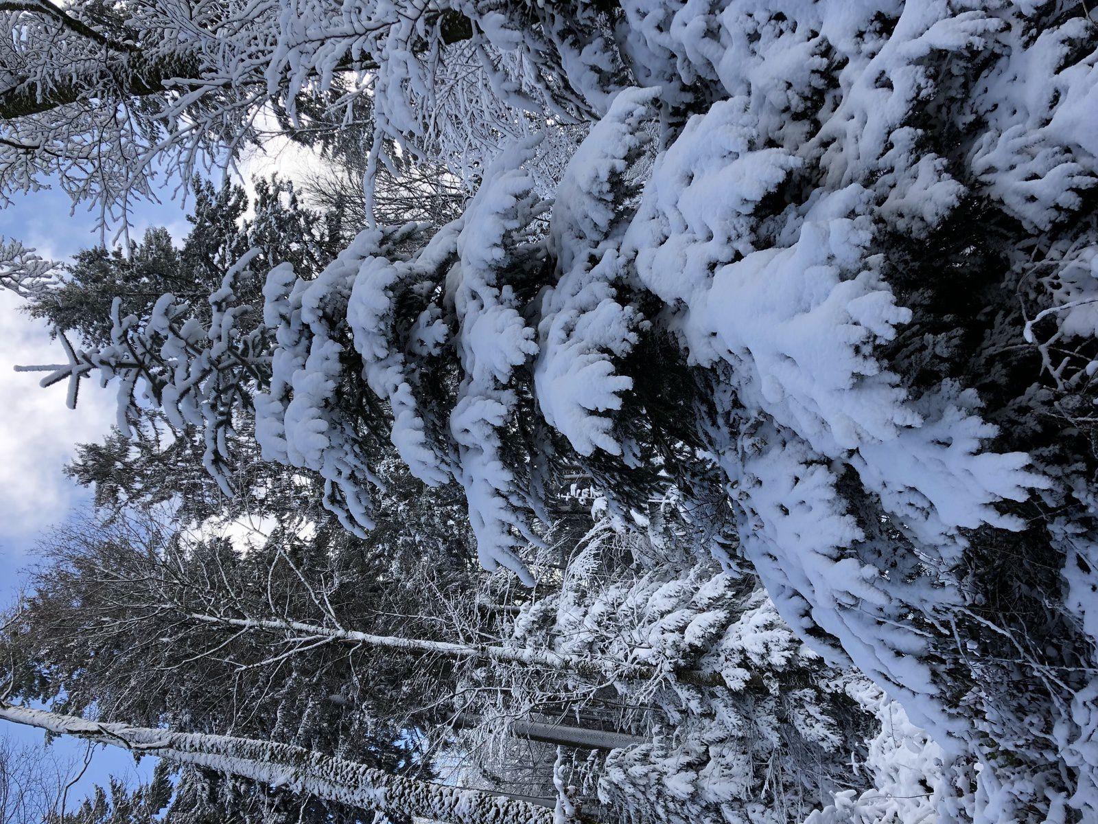 Mardi 29 Janvier:   Raquette à Thierrens