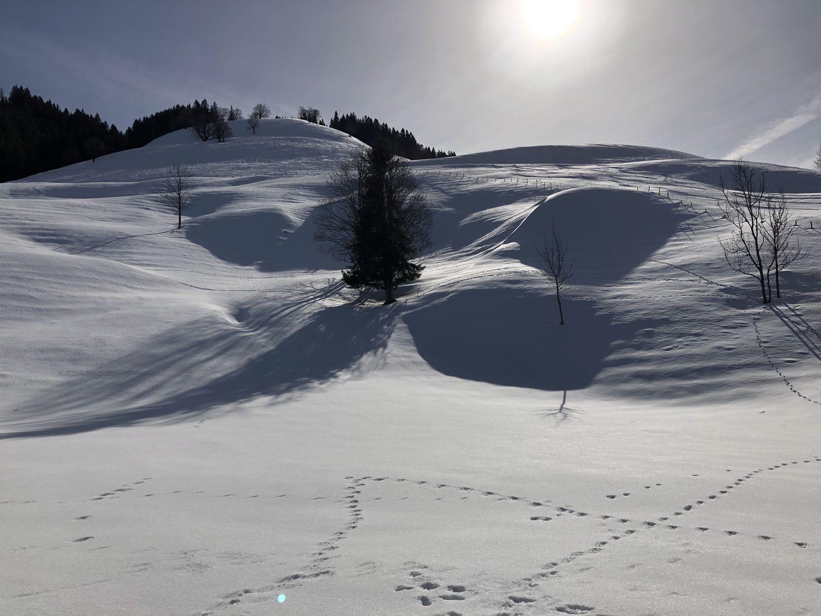 Mardi  19 Février :  Sortie raquette  du coté de la Valsainte: Pré de l'Essert