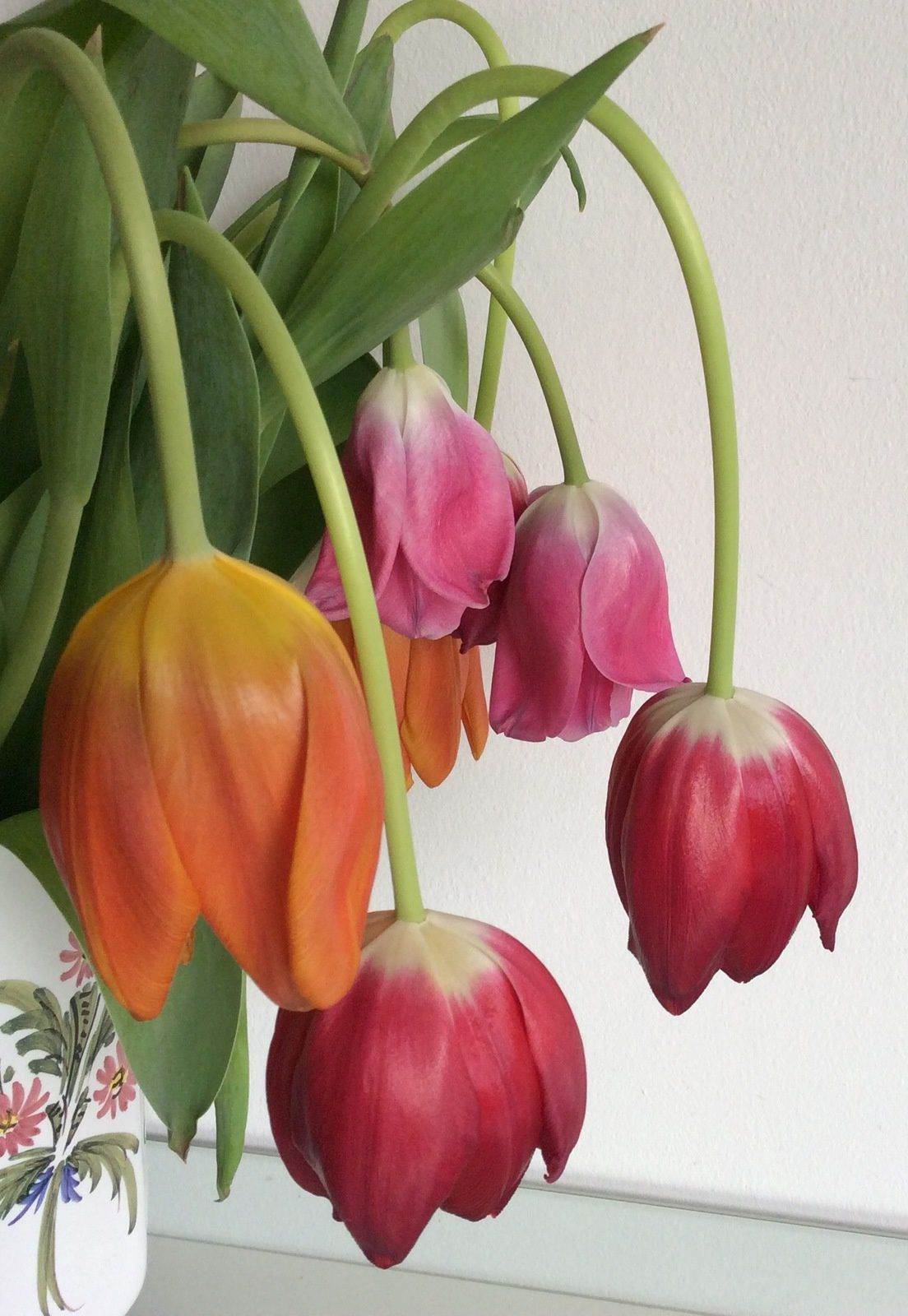 Des fleurs modernes qui ont bien pris leurs pilules de pesticides, au bout de 48h.