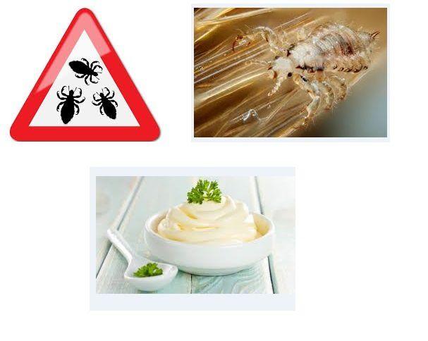 Remède antipoux le plus efficace que j'ai pu essayer et pas cher : la mayonnaise !