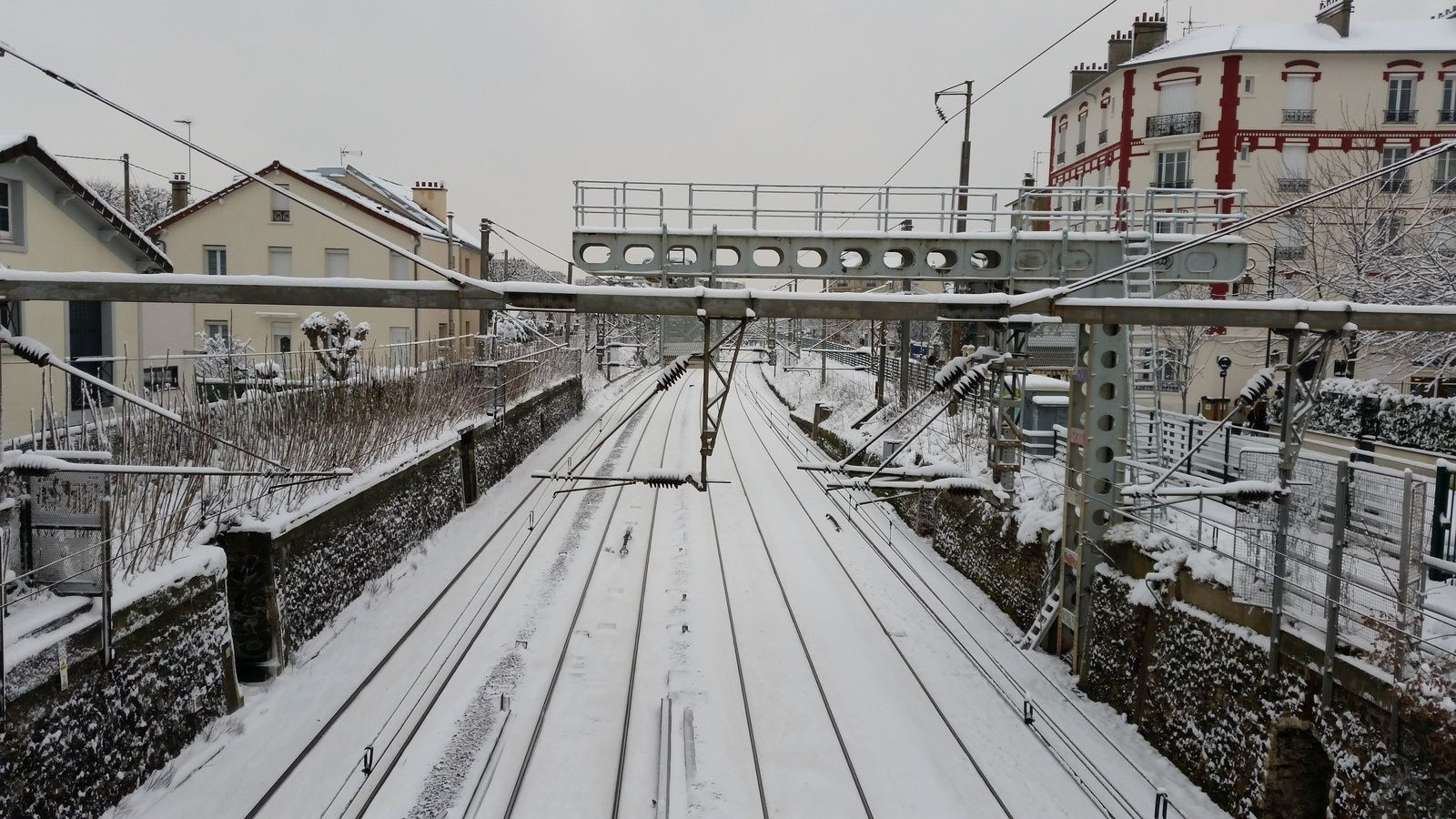 Colombes sous la neige et en photos