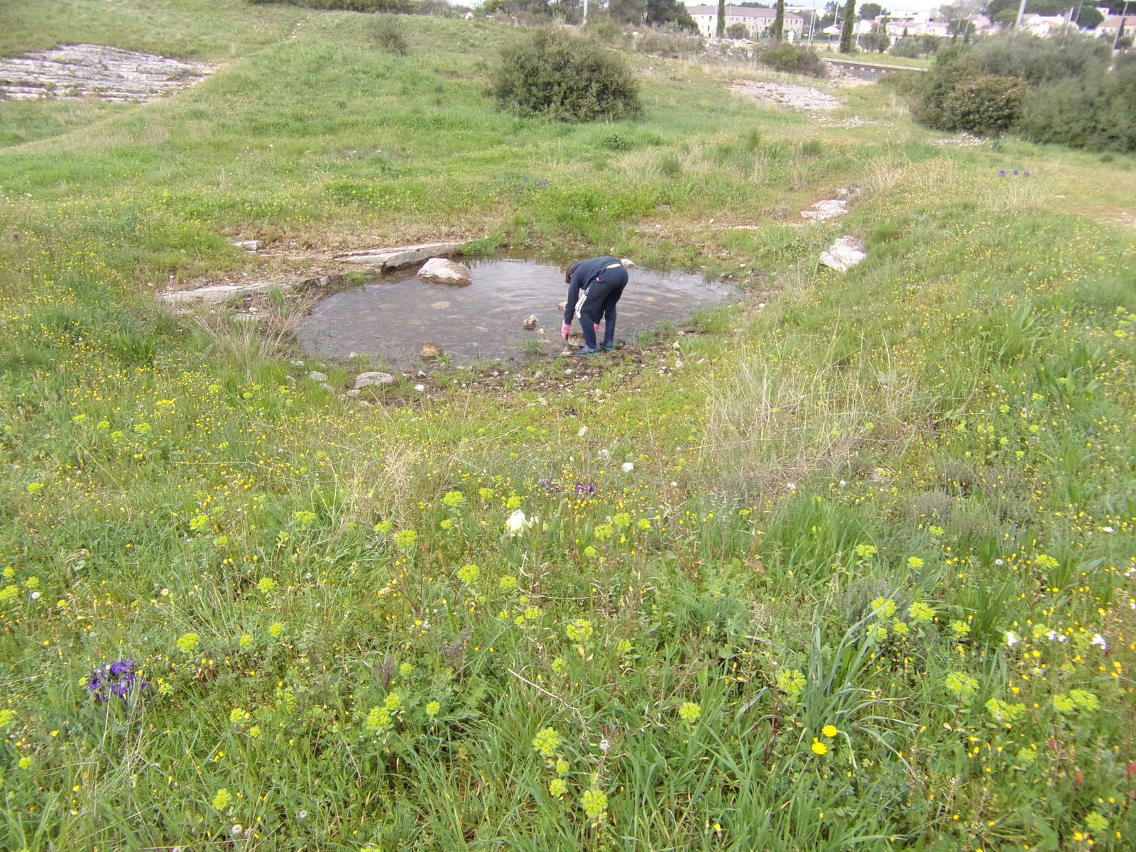 Balade sur la Via Domitia suivie d'un petit nettoyage