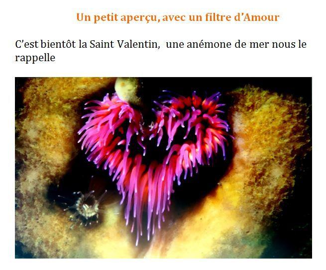 Laurent Ballesta - L'odyssée d'un enfant d'ici - Pierresvives jusqu'au 9 février 2019