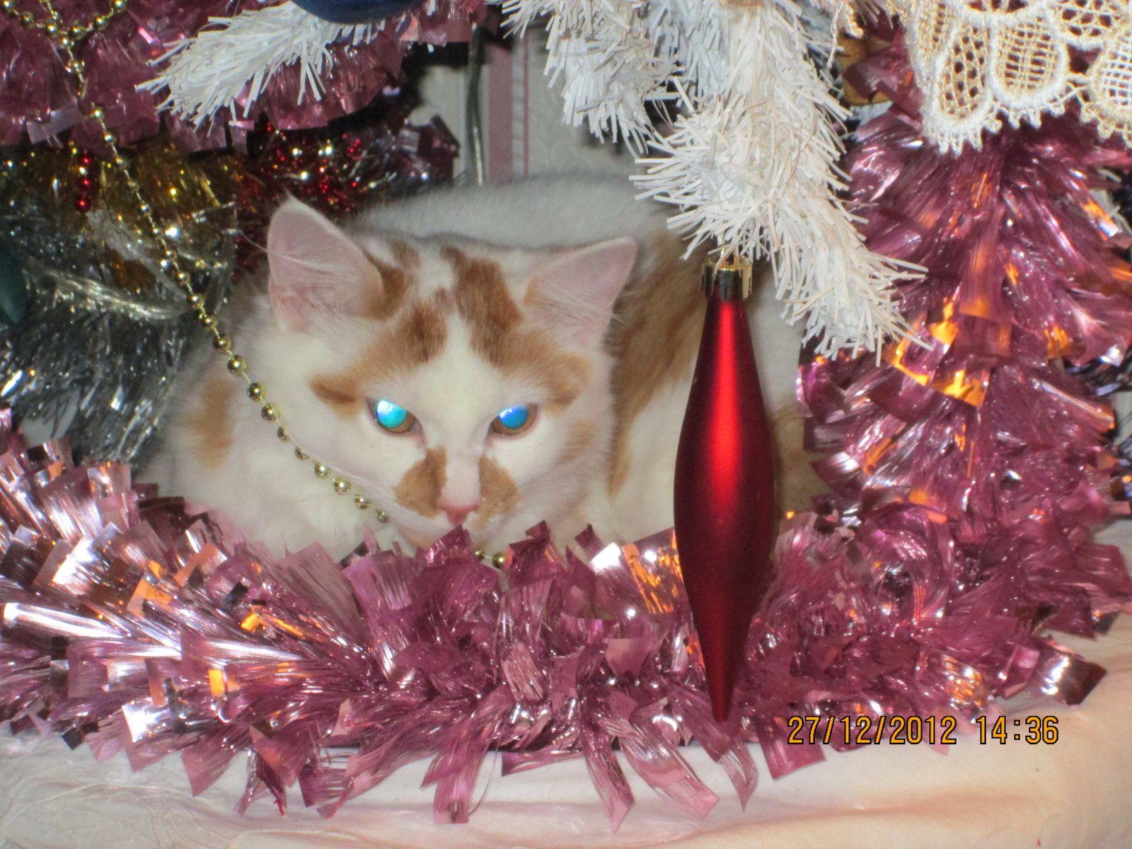 chat-pin de Noël