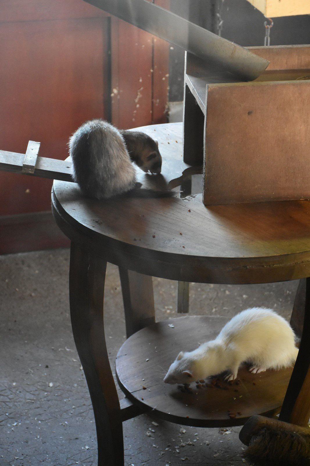 Zoo de Fort Mardyck P2 : Une ferme
