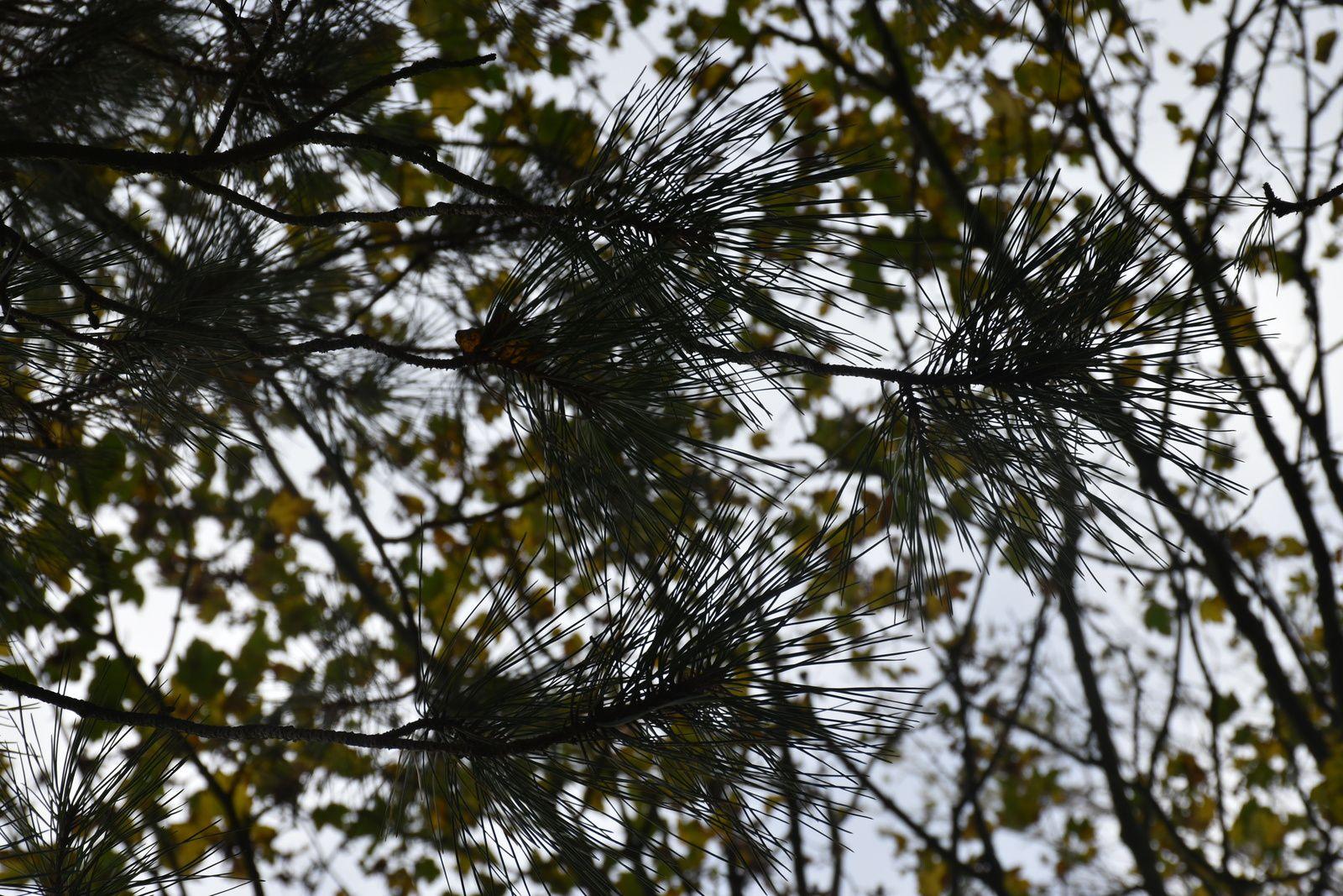 quelques arbres à l'automne