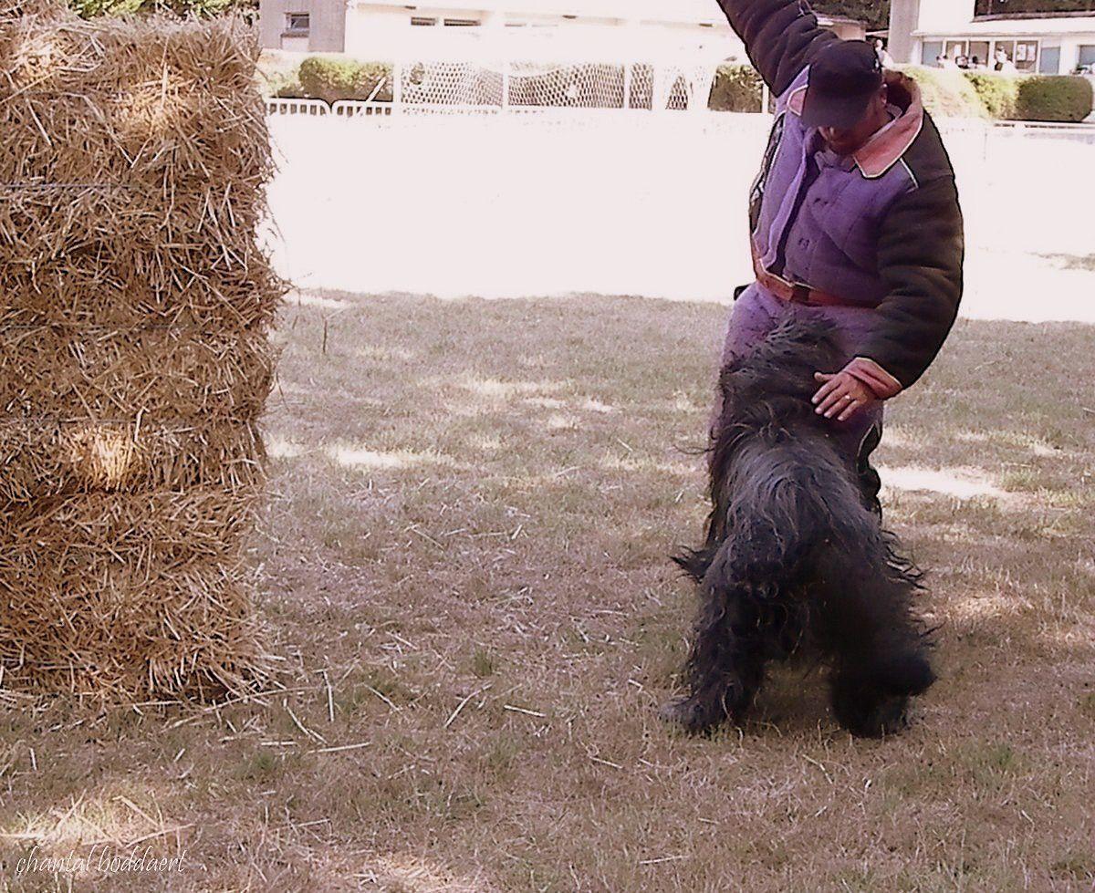 Démonstration canine à la fête du village au Villasavary, Aude