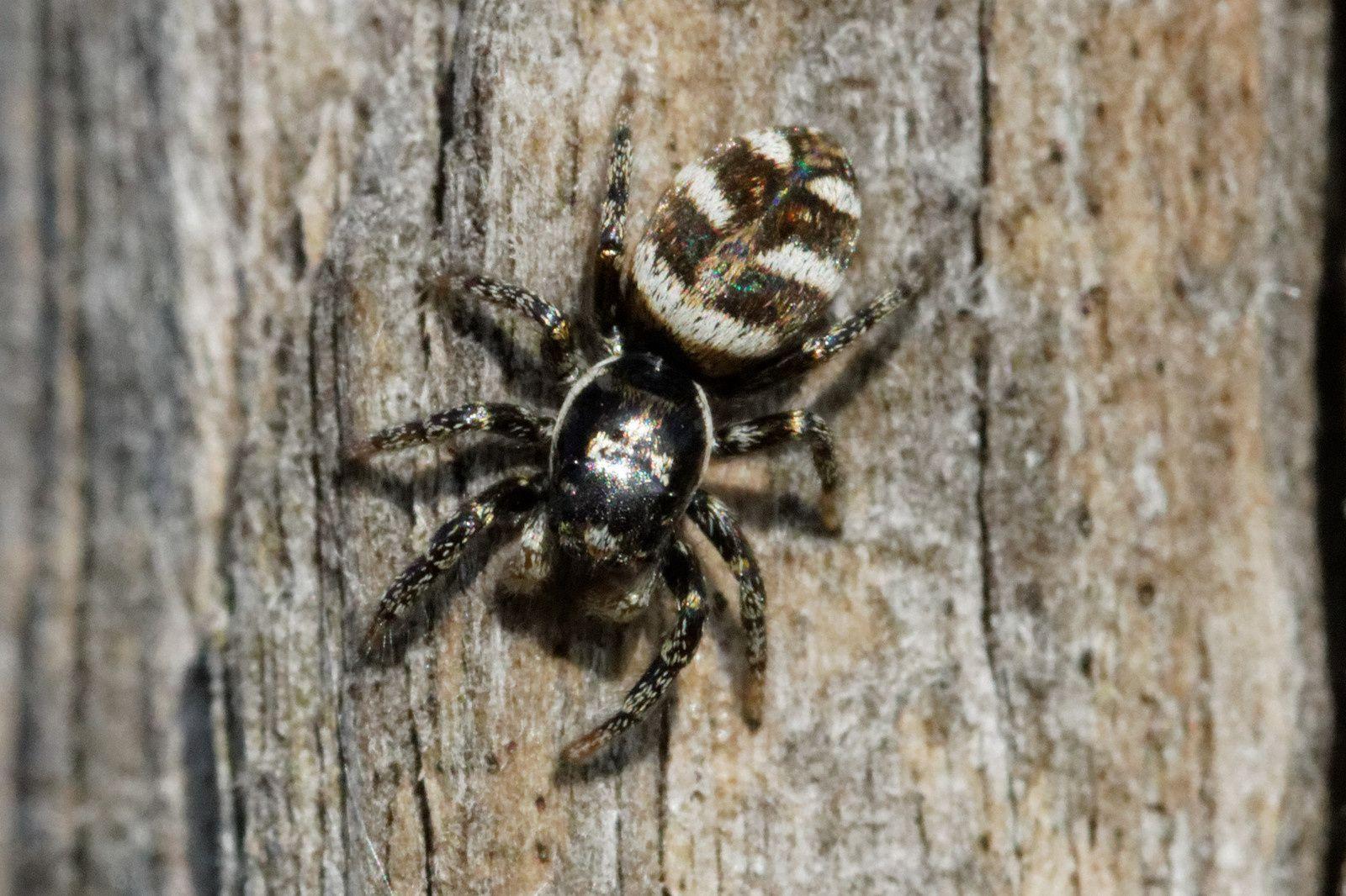 108 - Soleil, araignée, bourdon et odonate : 08/03/2014