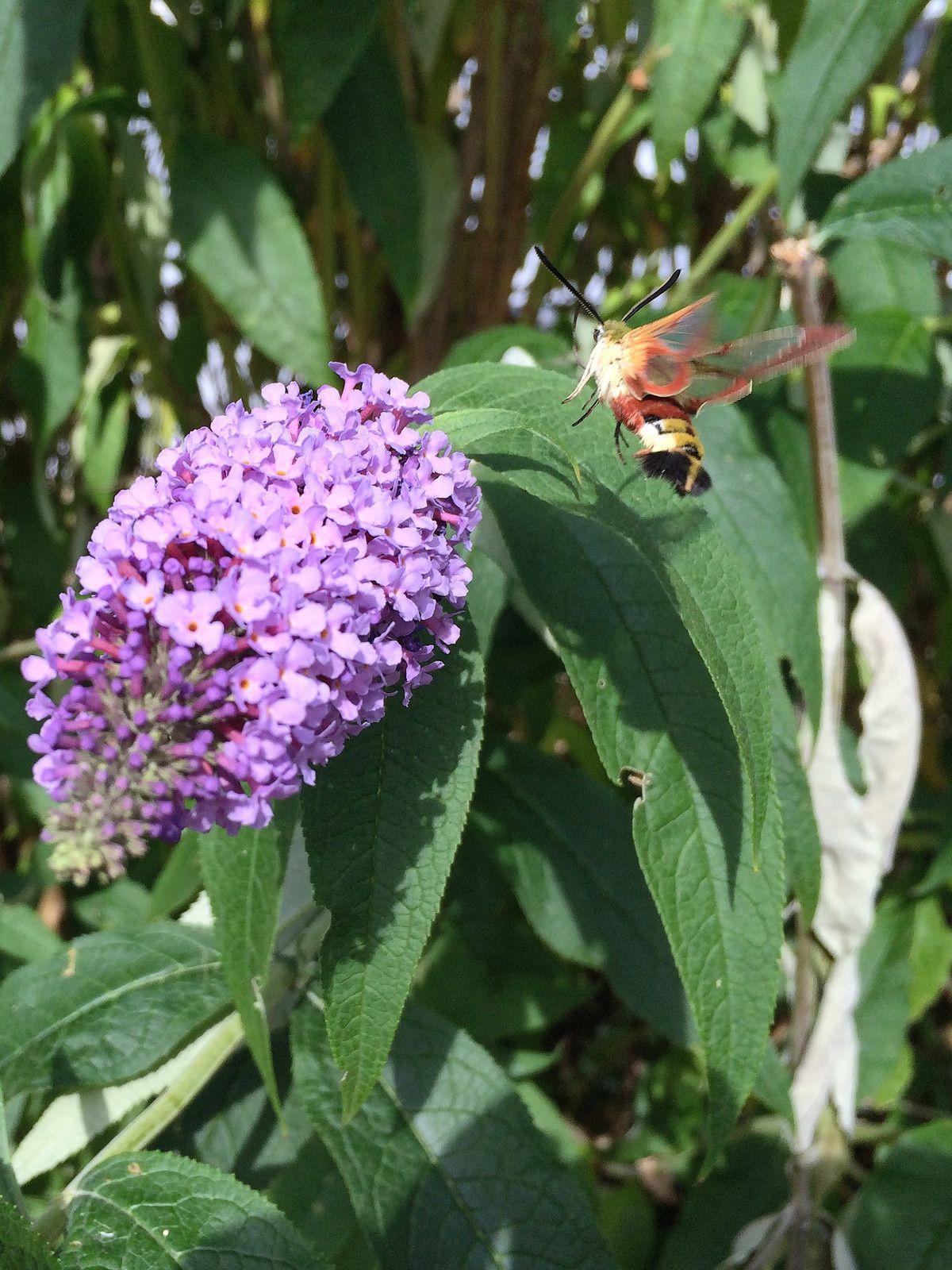 192 - L'arbre pour les papillons : 12/07/2015