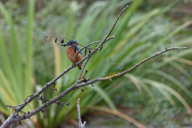 269 - Automne, on découvre les champignons ! : 29/10/2016