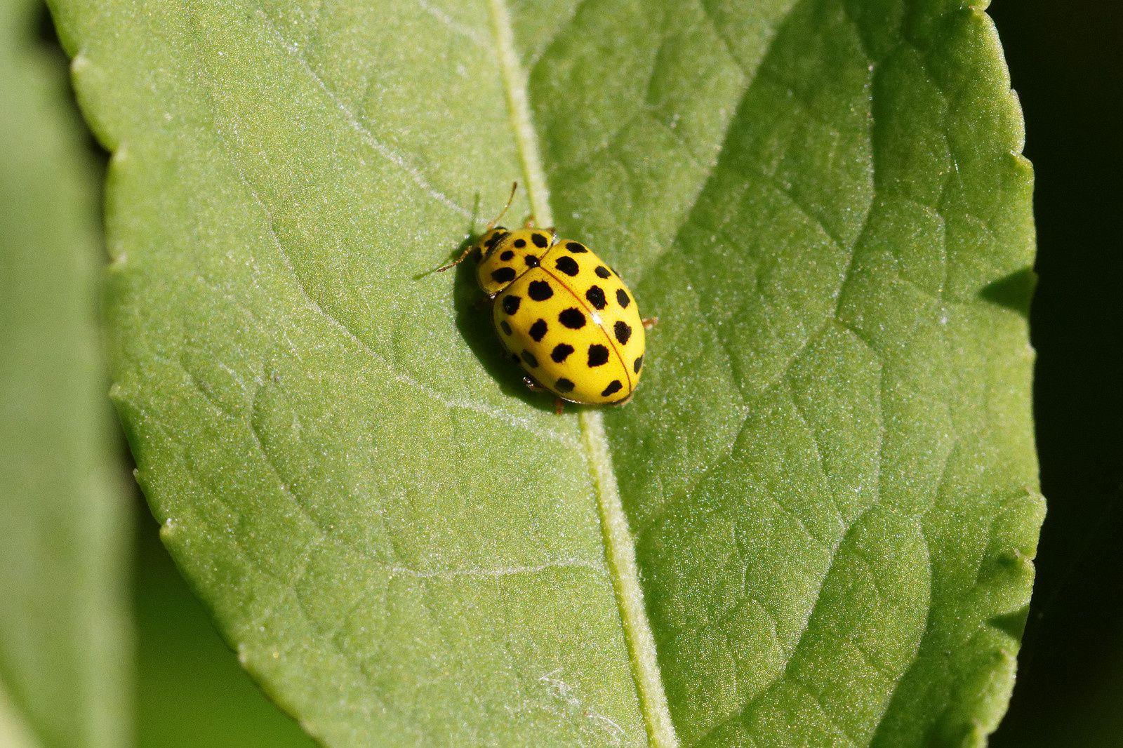 304 - Dans un silence, copulation, pollinisation et arrivée de Petits gravelots : 13/05/2017