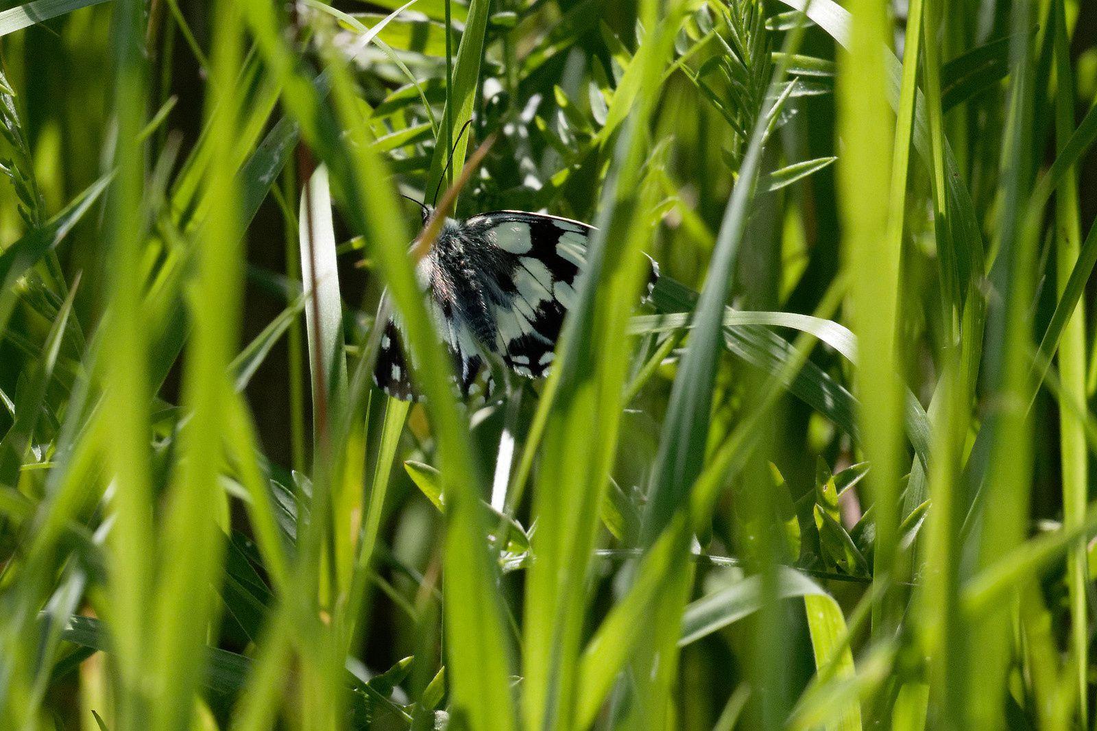 C'est le même Papillon photographié à deux endroits.