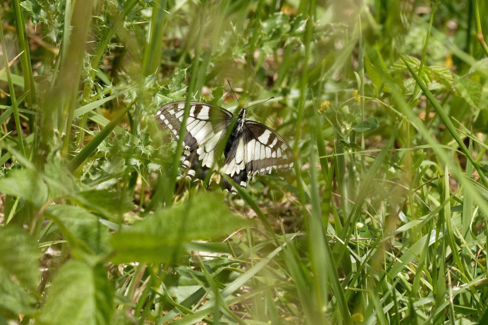 385 - Des animaux qui honorent des espaces naturels, à ne pas manquer ! : 26/05/2018