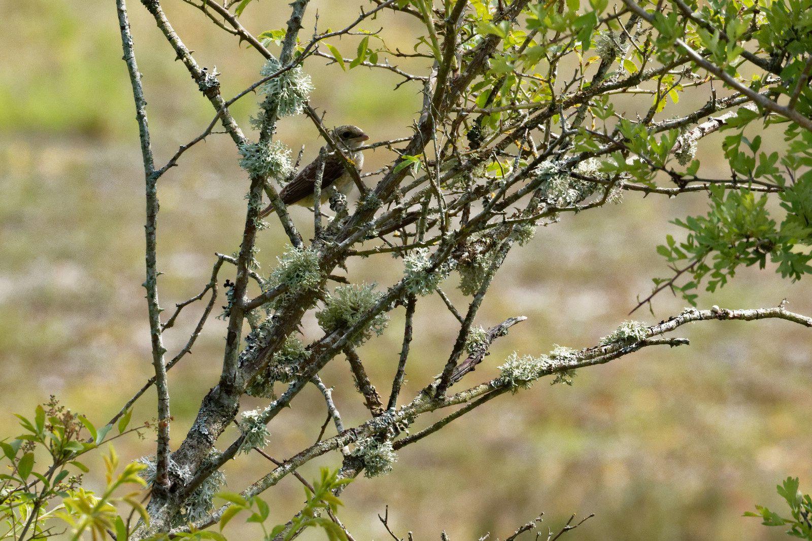 Notez au passage l'existence du Lichen sur la végétation. Il y en a partout !