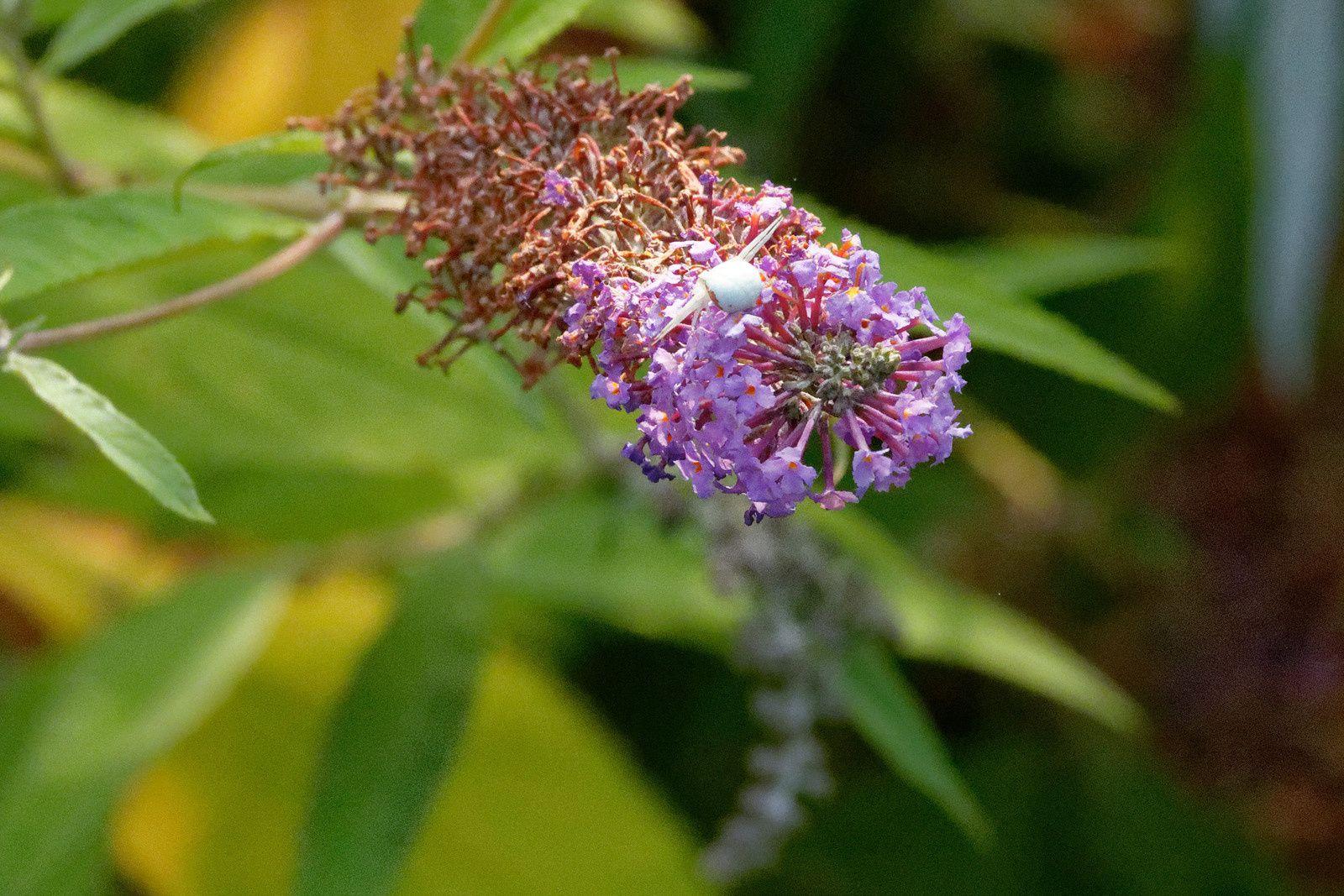 400 - Si je collecte le nectar et le pollen qu'est-ce-que j'aurai en retour ? : 21/07/2018