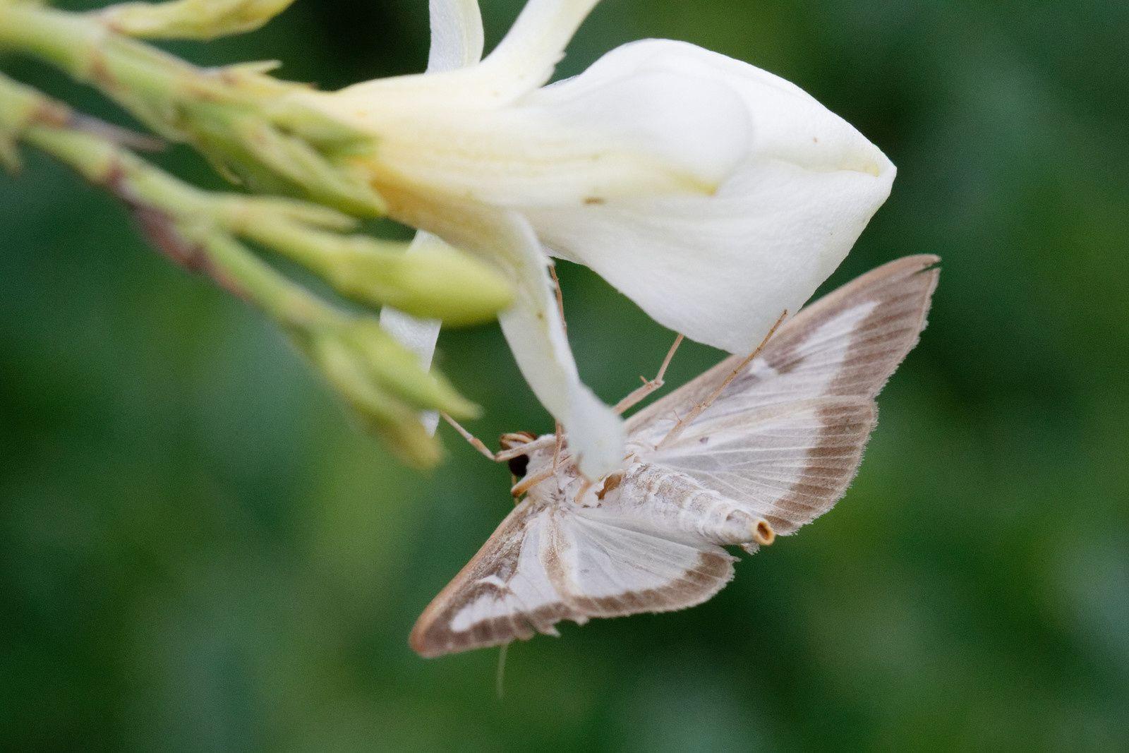 408 - Un château, des allées de Fleurs, une activité animale silencieuse : 26/08/2018