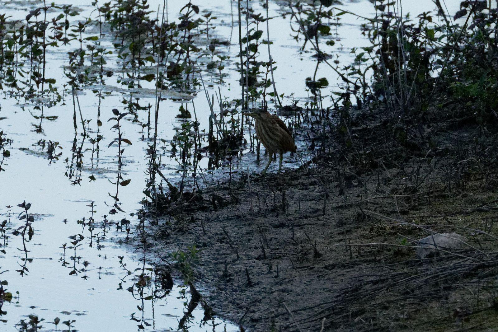 photos recadrées en fonction des reflets sur l'eau