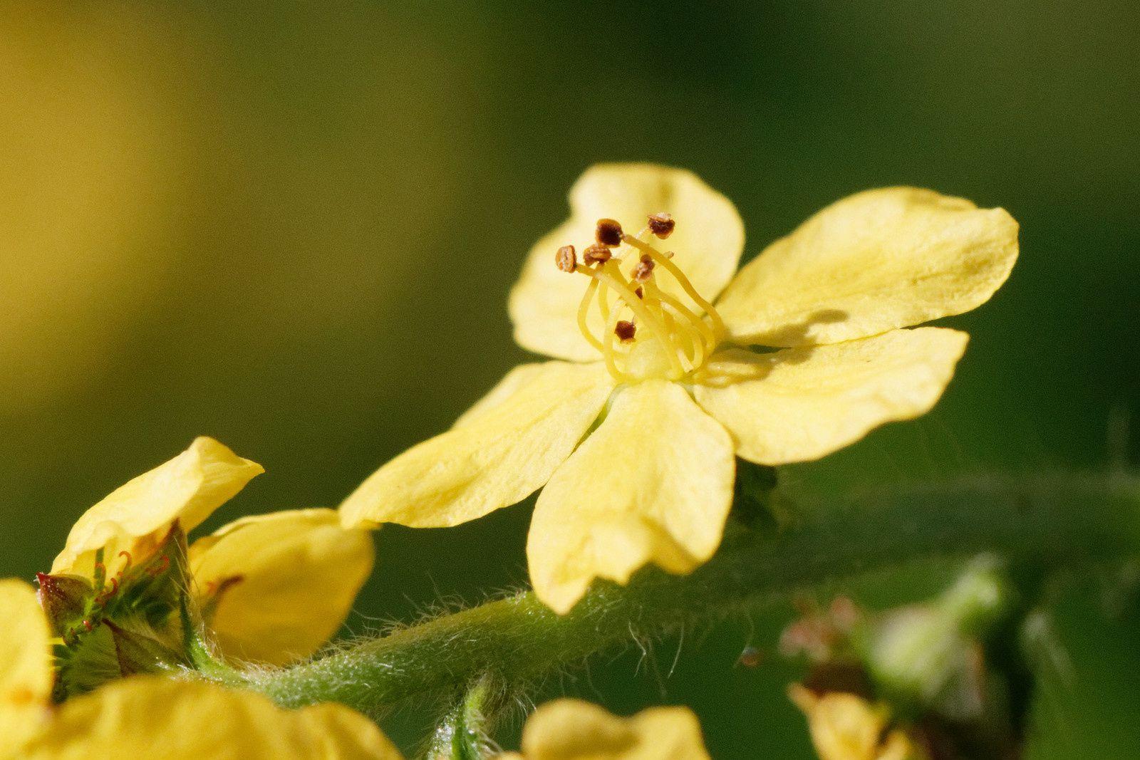 413 - Visite botanique guidée au Sausset, le temps de bien poser les yeux sur la Flore  : 15/09/2018