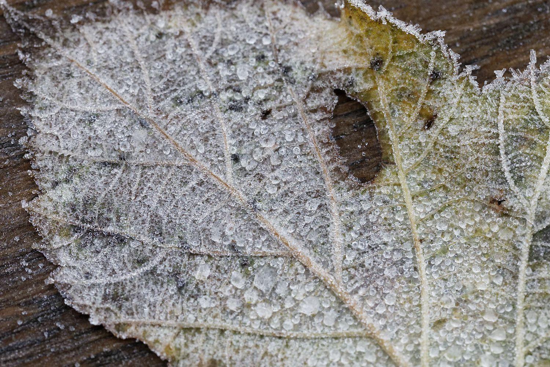430 - Ces cristaux, nous avons du mal à les voir même en hiver ! : 27/12/2018