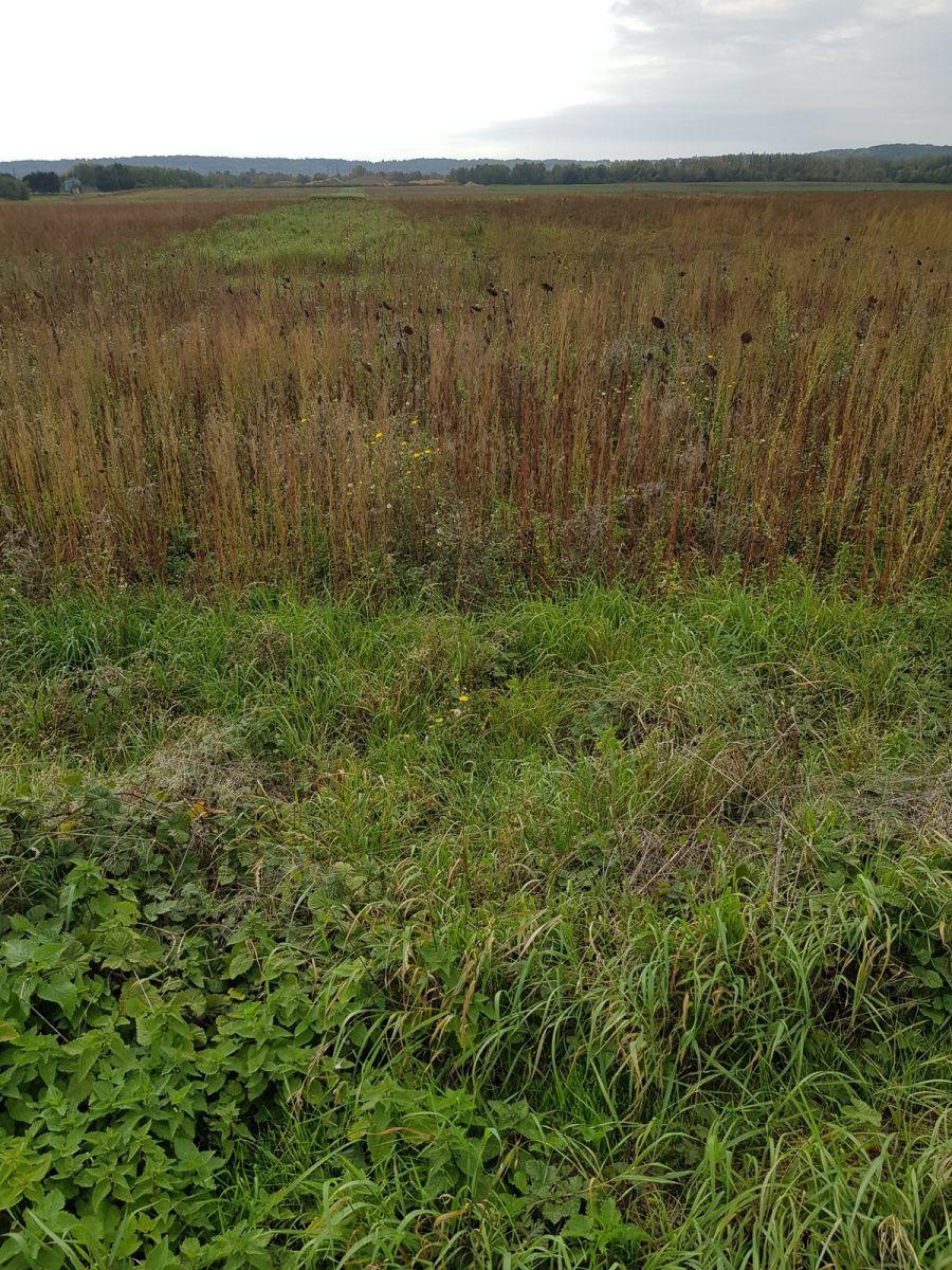 Pré ou champ laissé, oublié pour la végétation prisée par les Oiseaux.