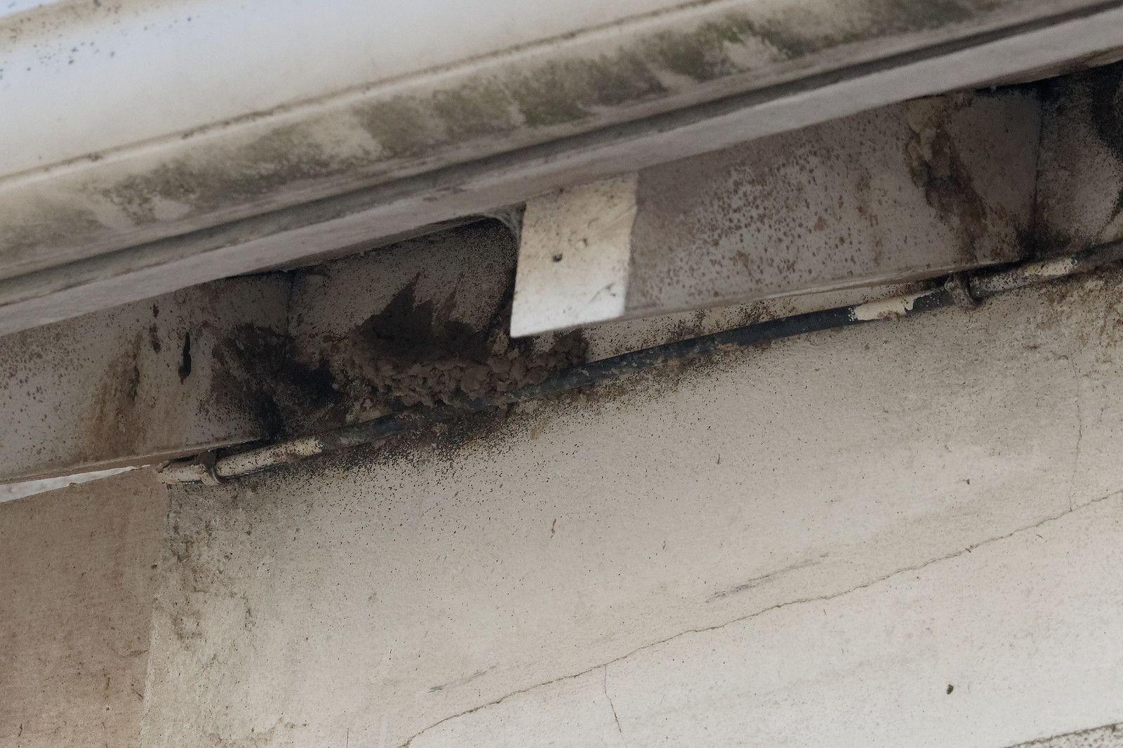 La courbure du nid est visible. C'est suffisament solide pour une HIrondelle.