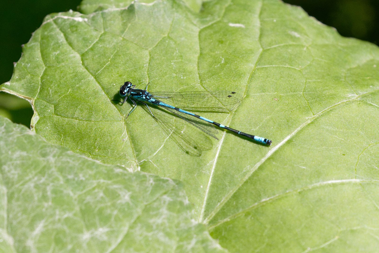 Agrion Exclamation !