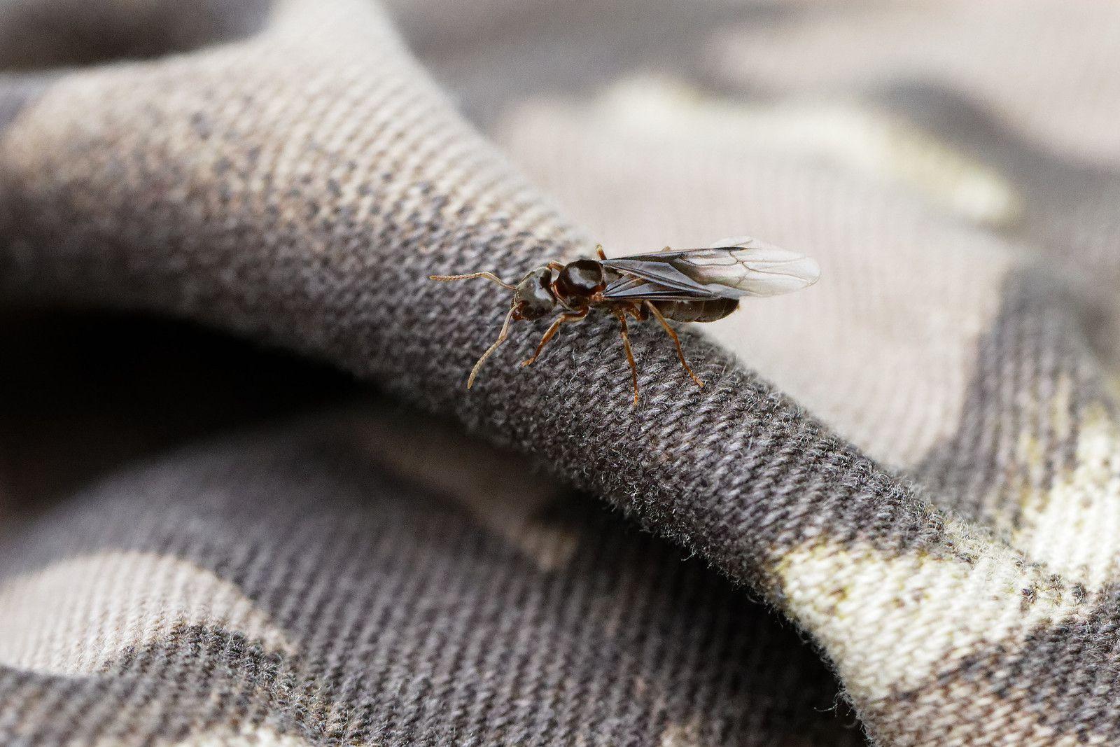 518 - Une Sésie d'Arthropodes en Forêt francilienne inespérée : 04/07/2020