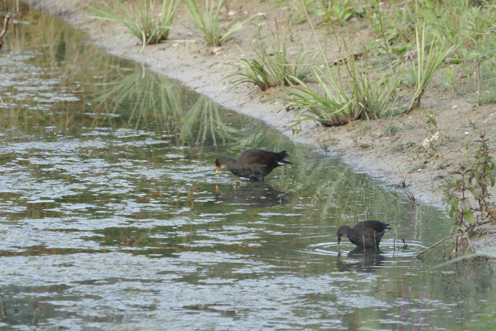 2 - Le parc de la Haute-Île en Seine-Saint-Denis : les animaux autour des bassins