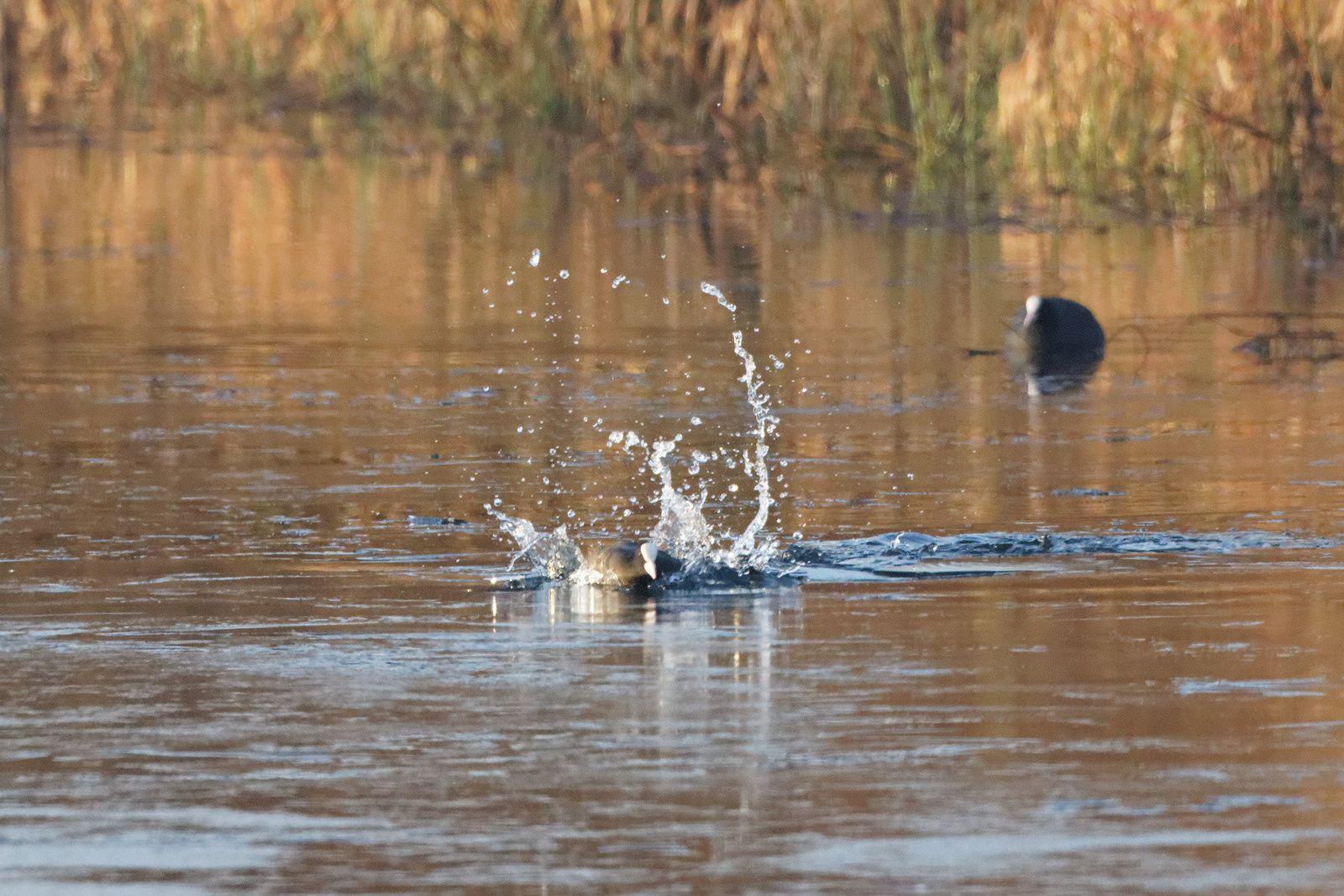 Sortir de l'eau n'est pas si facile... les ratés sont pour tout le monde !