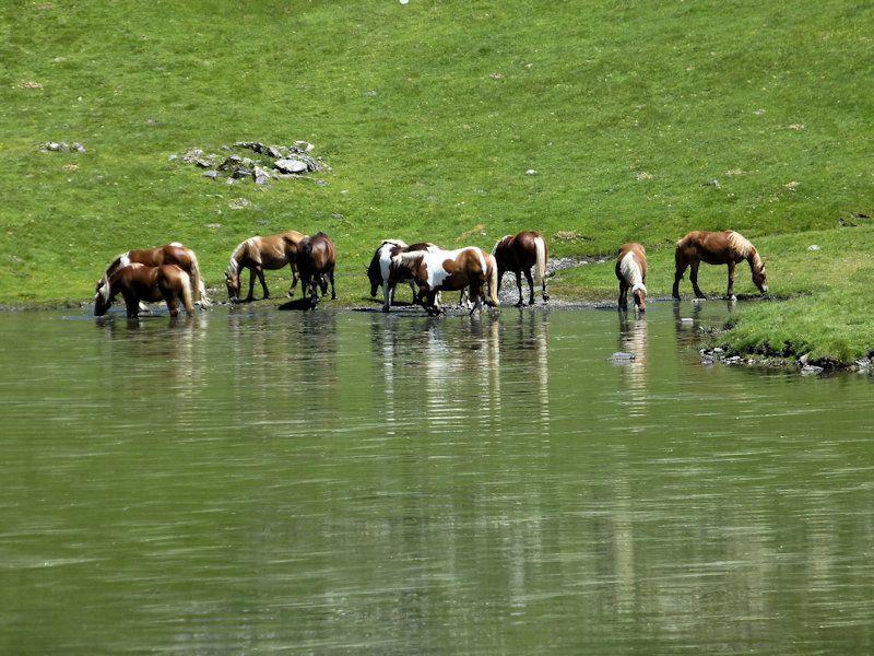 Pic des Quatre - Thermes          Lac d'Arises